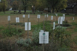 Example of garden crops
