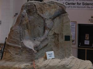 mammoth pelvis