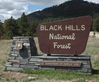 Image result for black hills national forest