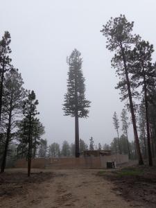 AT&T's tree