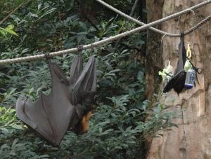 fruit bat on right